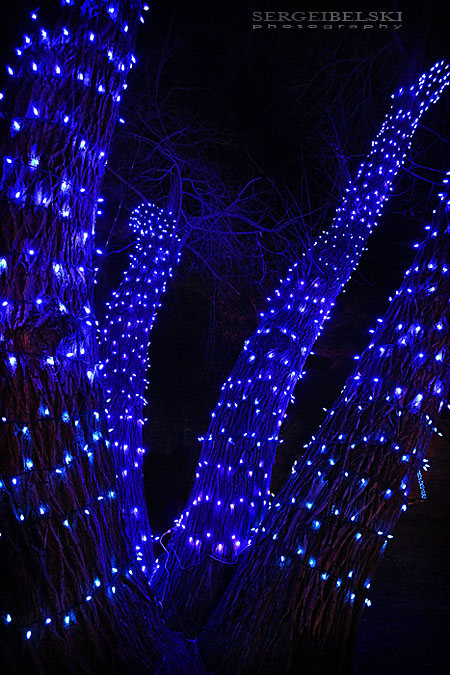 calgary zoo zoolights sergei belski photo