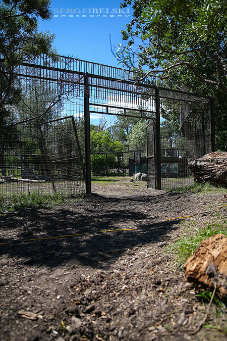 calgary zoo damage sergei belski photo