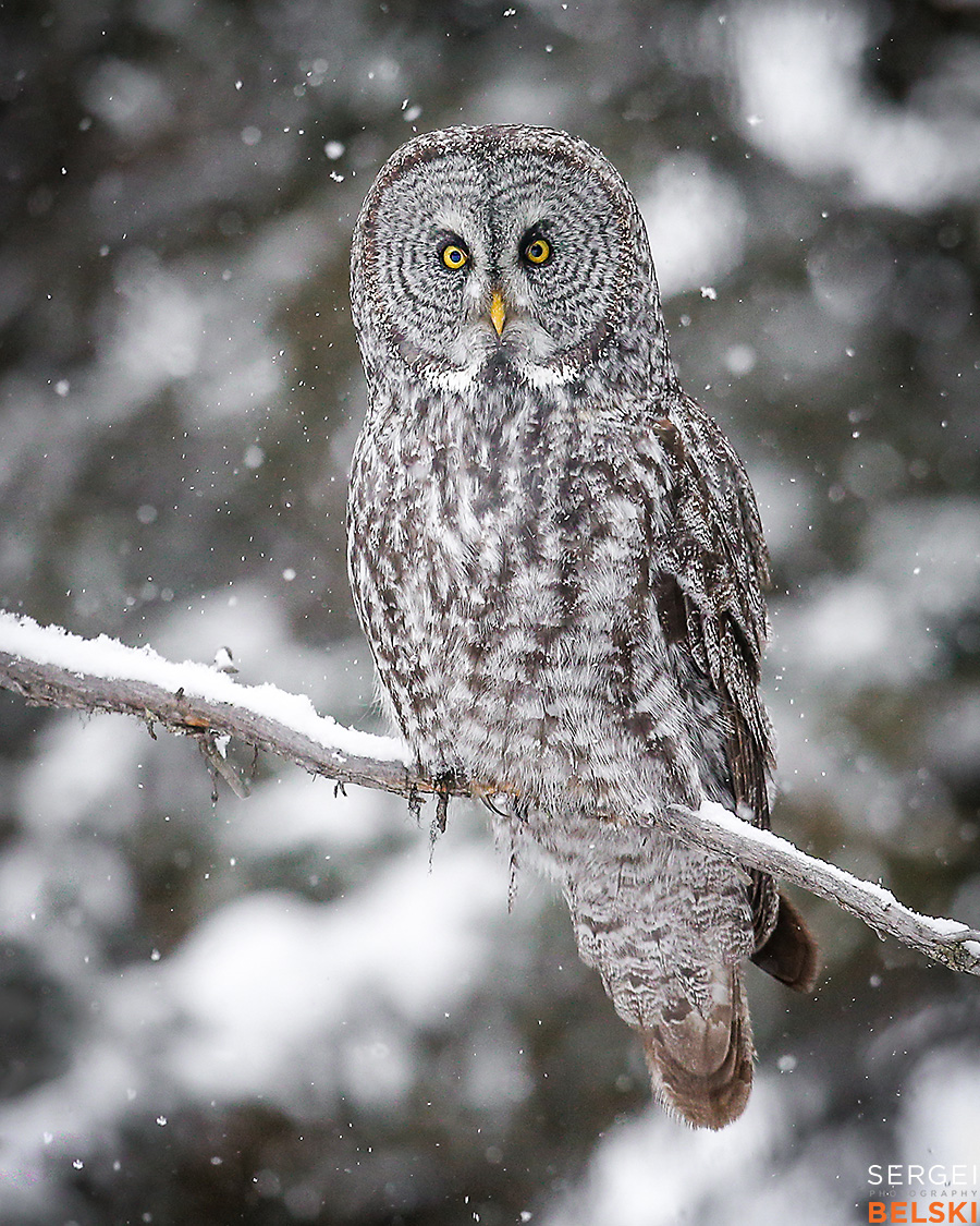 calgary wildlife photographer sergei belski photo