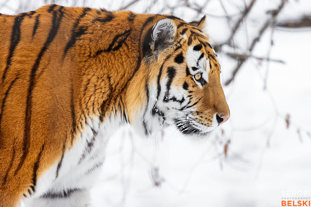 calgary zoo wildlife photographer sergei belski photo
